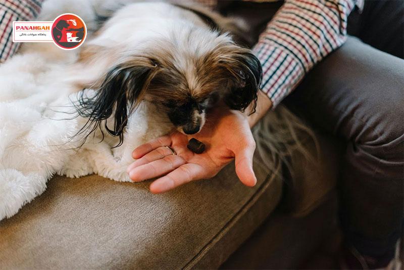 آموزش سگ با تشویقی