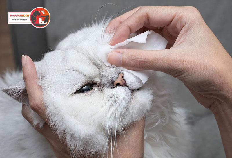 عفونت چشم گربه
