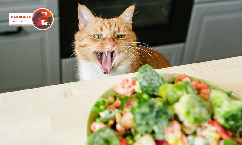 غذای خانگی گربه