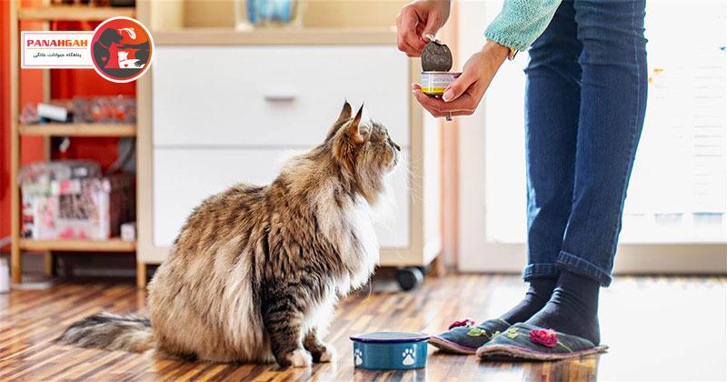 غذای کنسرو گربه