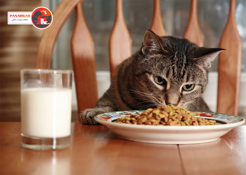 مصرف شیر گربه