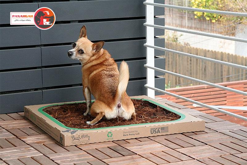 آموزش دستشویی سگ